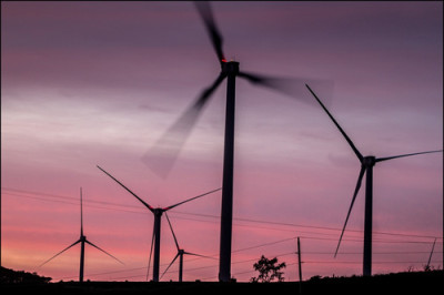 Morning at the Kahuku wind turbines.  11.20.13 ©PF Bentley/Civil Beat