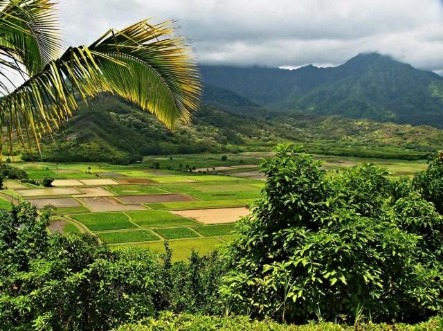Hanalei Taro Mountains Kauai North Shore
