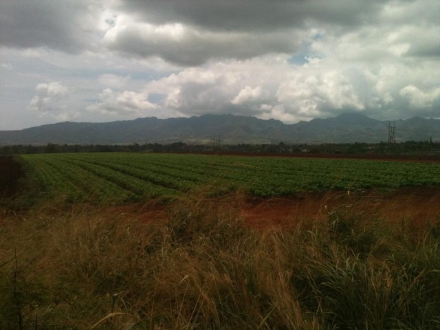 Developer Castle & Cooke is planning to build a 3,500-home community known as Koa Ridge in central Oahu. This Civil Beat file photo was taken in 2010.
