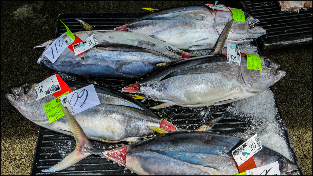 Lead Crop Tuna Auction
