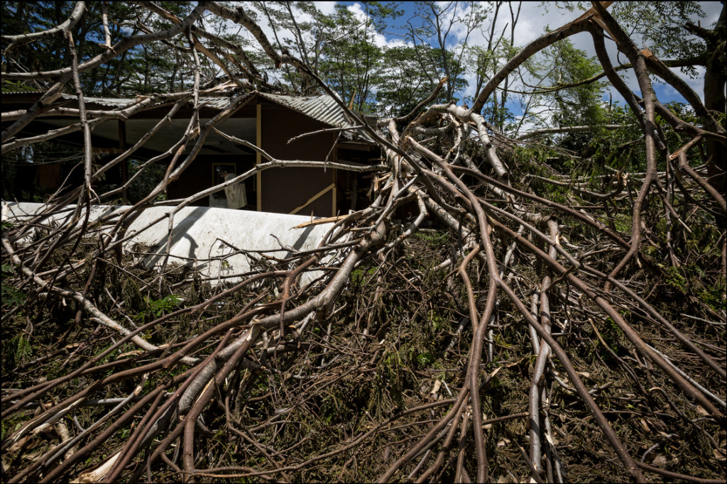 TREE HOUSE This house was particularly hard hit as large number of trees fell from Hurricane Iselle in Puna District of Hawaii Island.