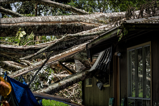 Hurricane Iselle knocked Albiza trees fall into this house in the Puna District on Hawaii Island.