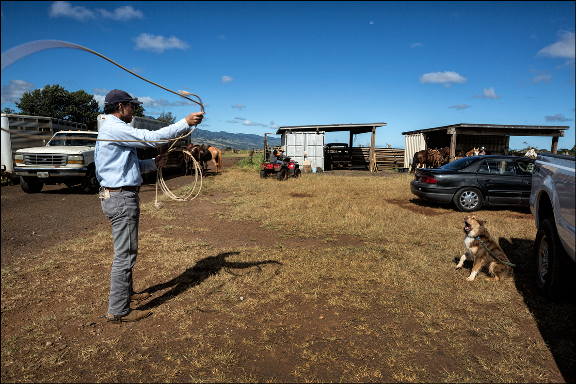 Clayton Hee practices with his lariat. That's his Australian Sheepdog, Kahekili, voicing support.