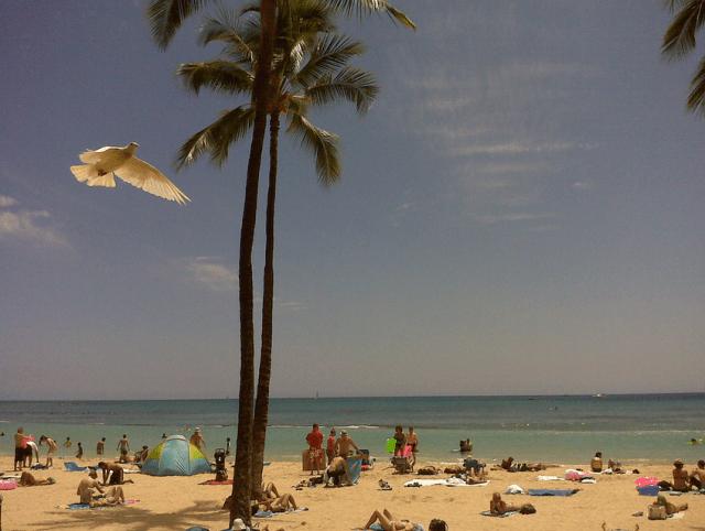 A bird in Waikiki