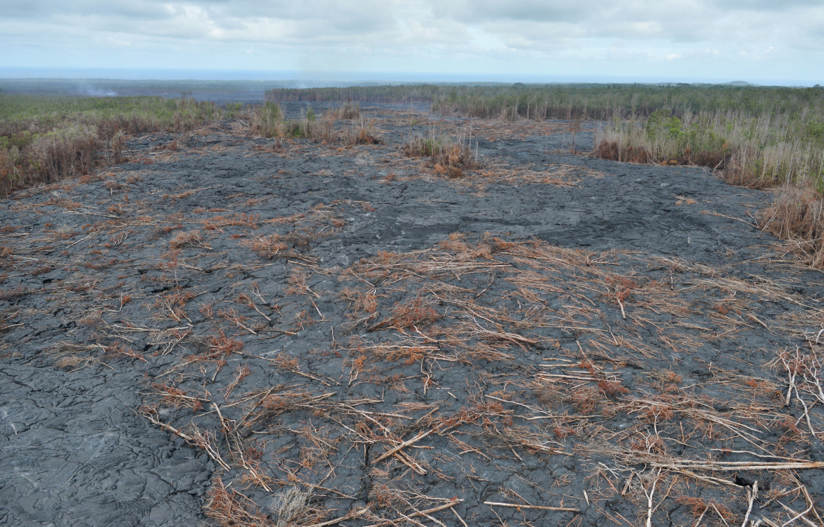We flew up towards the source and came upon literally hundreds of Ohia trees littered about the surface of cooled lava. North of Pahoa. 29 October 2014. photo Cory Lum.
