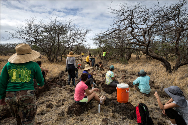 Volunteers clean part of the trail on Kahoolawe between Honoko'a and Honokanai'a dotted with leave trees, dry scrub and rocks. This is part of a sequence. 9.28.14