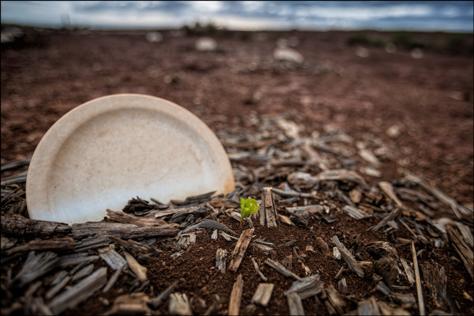 Experiment in planting on Kahoolawe done with old plates from the Four Seasons on Maui. The goal was to collect water and see if anything would blossom. So far this was the only plant to grow in the field. 9.28.14