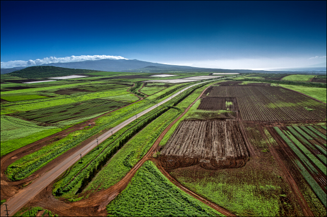 Monsanto, a multi-billion dollar international seed company, leases some of this land on Molokai.