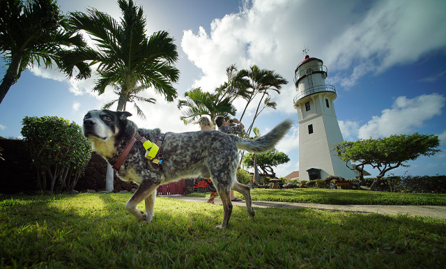 Gary Thomas, US Coast Guard Commander retired leads some friends on a tour of the Diamond Lighthouse with his dog named Scout.  17 april 2015. photograph Cory Lum/Civil Beat