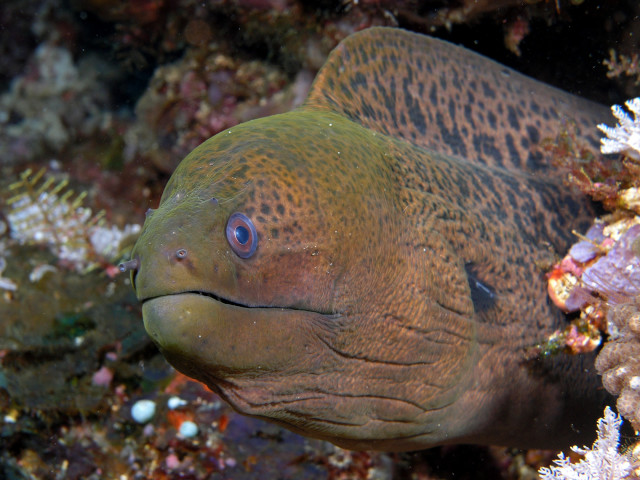 There isn't data that tracks the number of eel bites in Hawaii.