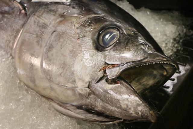 An ahi head at the Honolulu fish auction.