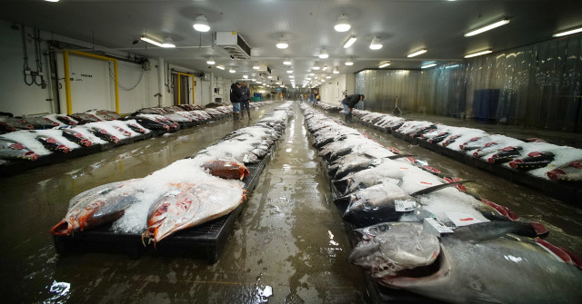 Tuna is laid out for fish buyers at the Honolulu fish auction. Ahi is one of the foods that tops the list of food-poisoning outbreaks in Hawaii.