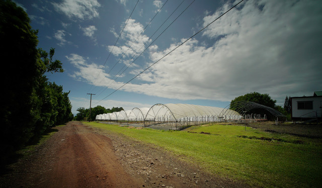 Empty structures used for tomato farming at Richard Ha's farm. Hawaii island farmer. Hawaii Energy. 1 july 2015. photograph Cory Lum/Civil Beat