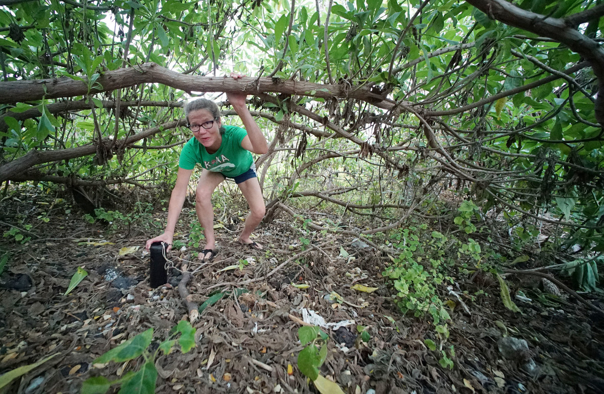Kealakekua Bay Manini Beach neighbor Suzy Snow climbs thru brush to retrieve a mosquito trap at Manini Beach.