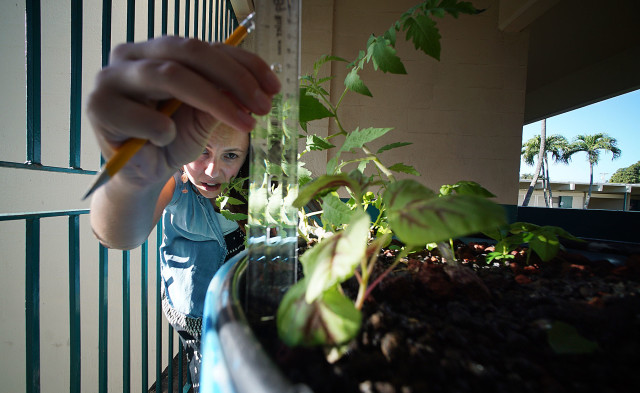 Leary assists her students with tomato plant measurements in their hydronponics setup.
