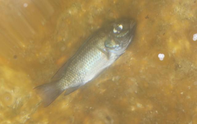 Capitol Dead fish pond1. 26 april 2016.