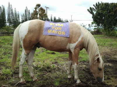 One of the innovative signs for Kim 2012 campaign sat on a horse.