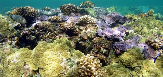 Coral reefs in the clear blue waters of Kure Atoll in Hawaii's Papahanaumokuakea Marine National Monument.