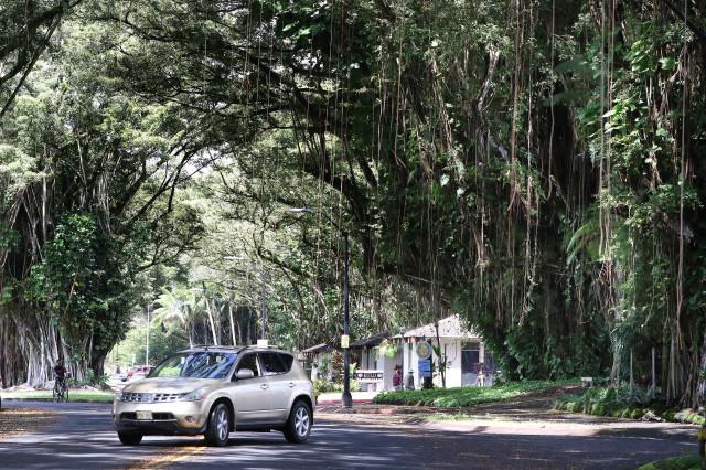 Banyan Drive Hilo Hawaii road. 15 july 2016