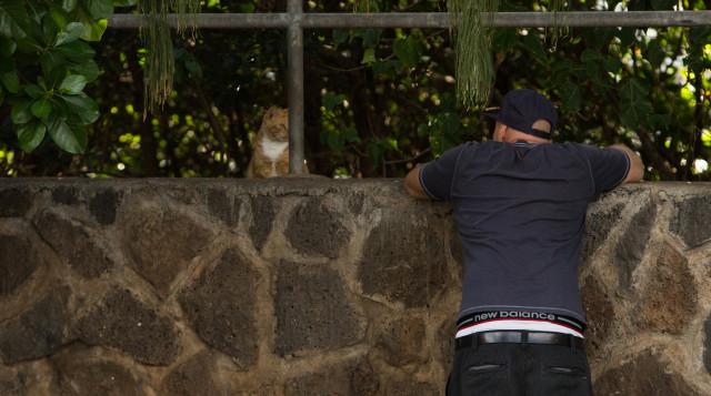 Man visiting feral cat in Hawaii Kai parking lot.
