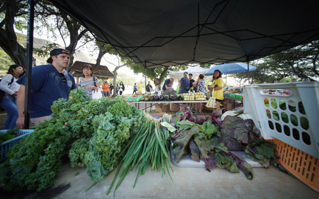 KCC Farmers Market vegetables. 18 april 2017
