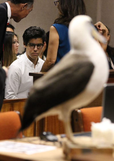 Christian Gutierrez sits in gallery before sentencing in Judge Jeanette Castagnetti's courtroom fronting a stuffed Laysan Albatross that the prosecutors office brought into the courtroom.