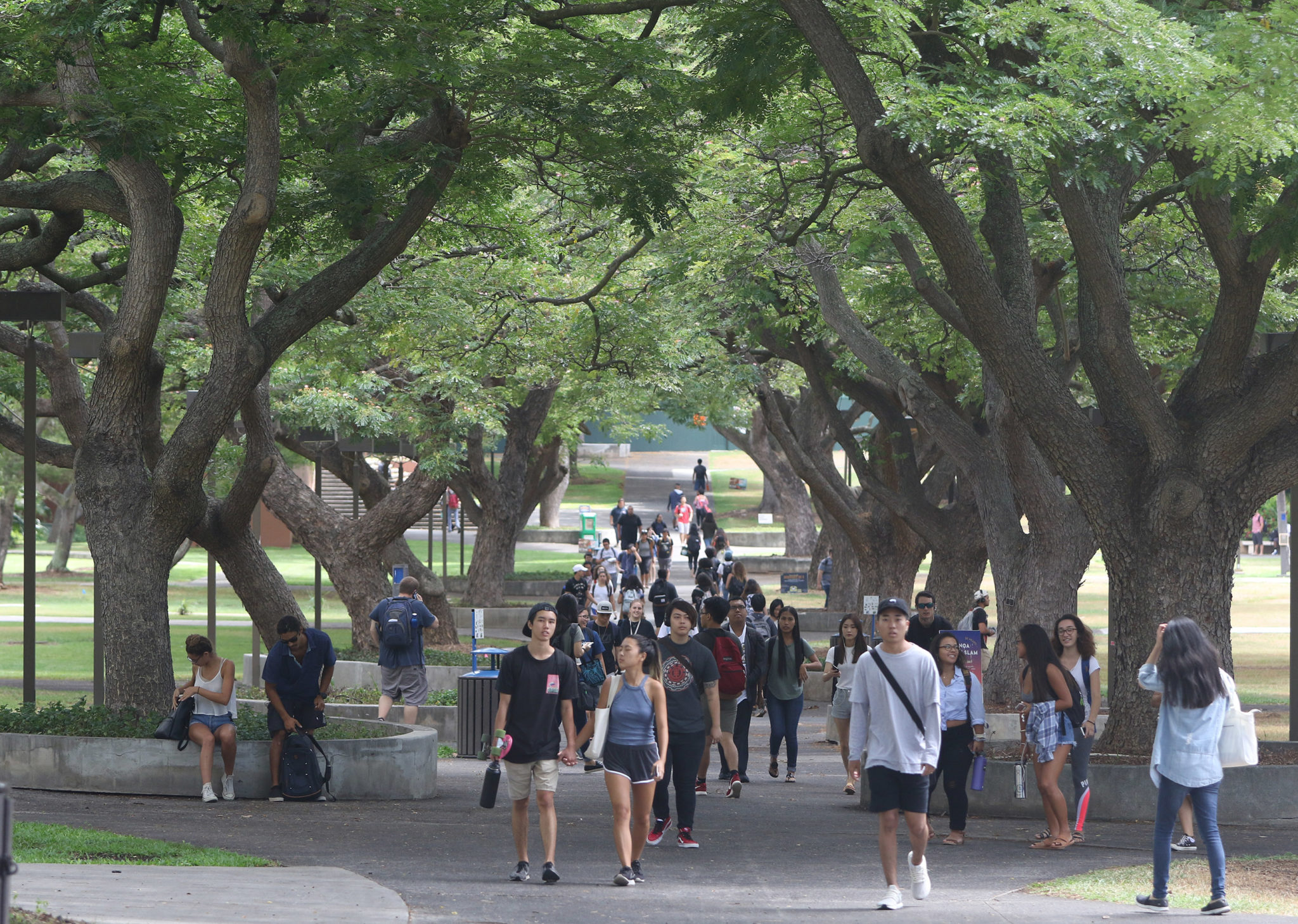 University of Hawaii at Manoa mall near UH art building1.