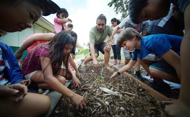 Joe Wat from Aina In Schools assists Ala Wai Elementary 4th graders in planting 'Uala or Hawaiian Sweet potato cuttings in their garden.