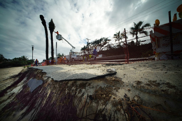 Workers take down large Palm trees at Sunset Beach with eroded bike path in foreground.