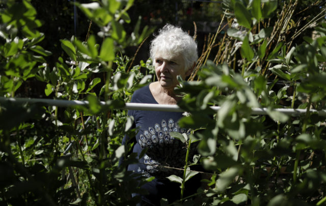 In this March 2, 2018, photo, Christine Sheppard poses for a picture in her backyard garden in Oceanside, Calif. Sheppard said she sprayed Roundup for years to control weeds on her coffee farm in Hawaii. In 2003, she was diagnosed with non-Hodgkin's lymphoma and given six months to live. Now 68, she is in remission but experiences severe pain in her hands and legs from her cancer treatment and has a weak immune system. She believes Roundup is to blame. A federal judge in San Francisco will conduct his own review of the product's cancer risk during an unusual set of court hearings scheduled to start on Monday, March 5. (AP Photo/Gregory Bull)