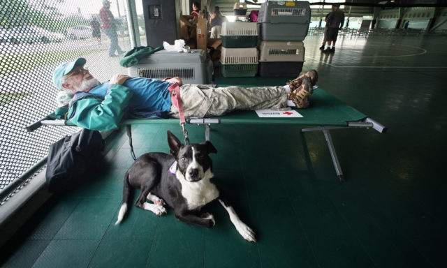 Leilani Estates survivor Clive Cardozo with dog Jax rest in the Pahoa Recreational Center where a Red cross Shelter was setup to handle animals too.